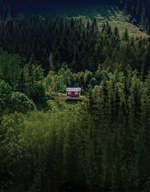 black mountain - vertigo - brad birch